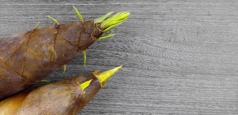 【春の食材】春が旬の野菜をオリーブオイルで堪能しよう!