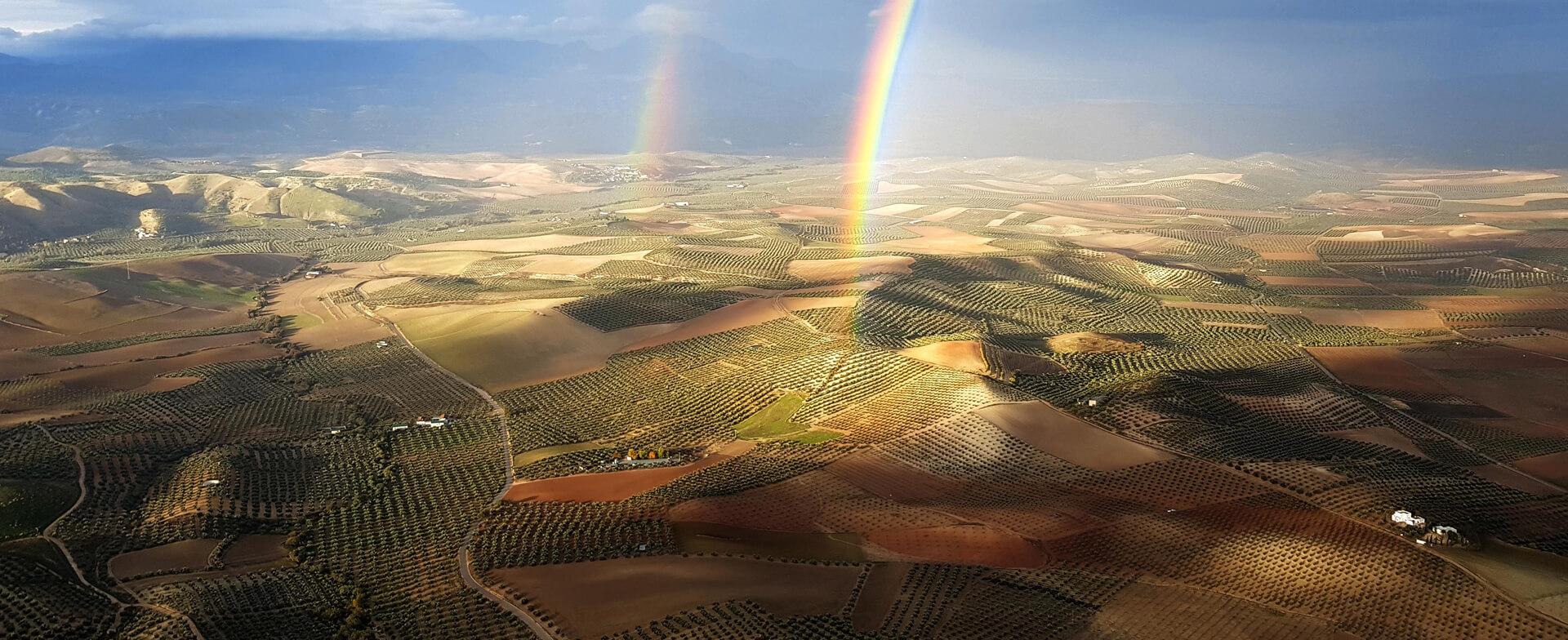 スペインはオリーブオイル生産量が世界一