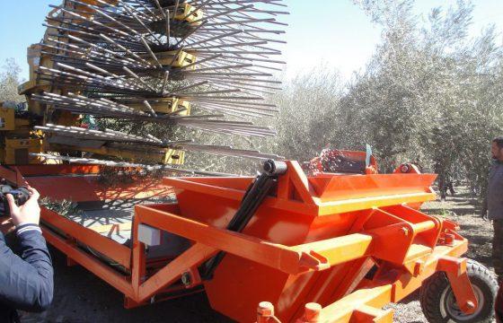 MECAOLIVAR、オリーブ栽培の革新と新技術