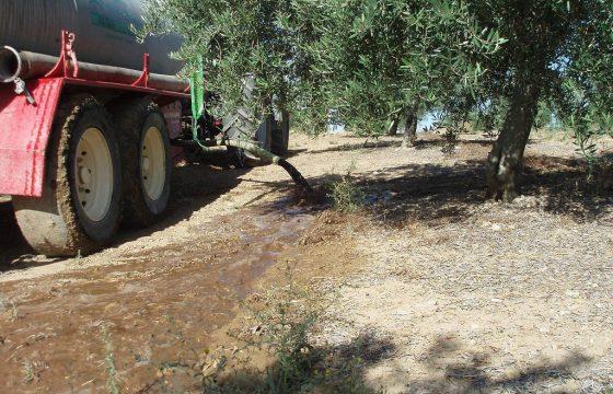 オリーブ農園に適用される、搾油所に起因する廃液の管理