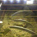 ▷ 【オリーブオイル抽出】オリーブオイルの搾取時の大気の変化